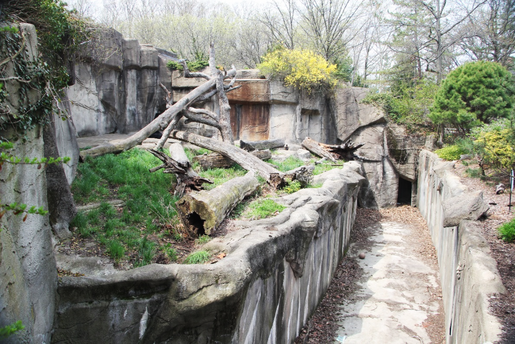 Cleveland Zoo Tiger And Sloth Bear Exhibit Cleveland